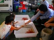 金魚すくいのサムネール画像