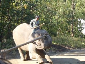 ゾウさんて力持ちですね~