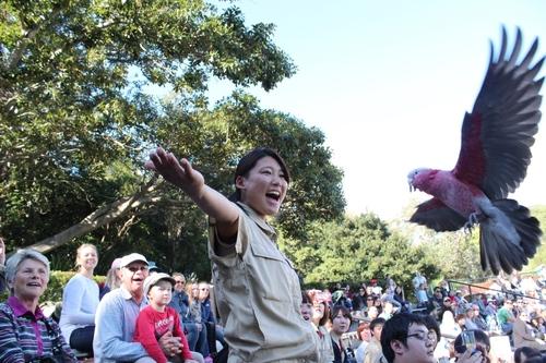 zoo-birdshow.JPG