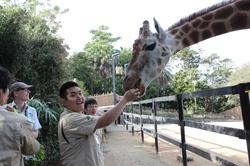 zoo-giraffe.JPG