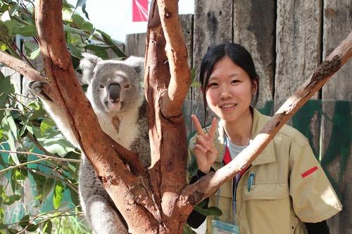zoo-koala3.jpg