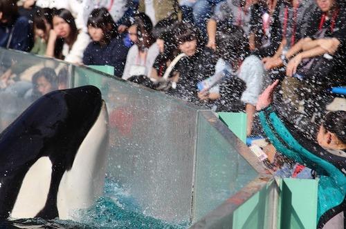 orcashow3.jpg