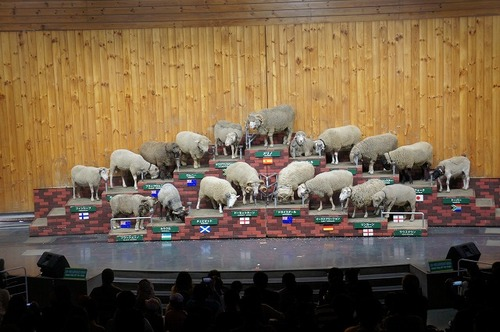 sheepshow2.jpgのサムネール画像のサムネール画像のサムネール画像のサムネール画像