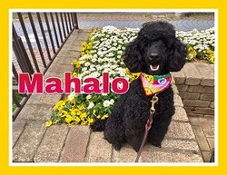 https://tokyo.iac.ac.jp/blog/assets_c/2019/10/2019.10.18mahalo-thumb-250x193-31451-thumb-250x193-31452-thumb-250x193-31456-thumb-250x193-31472.jpg