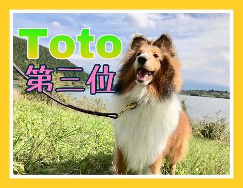 https://tokyo.iac.ac.jp/blog/assets_c/2019/10/2019.10.18toto-thumb-500x388-31508.jpg