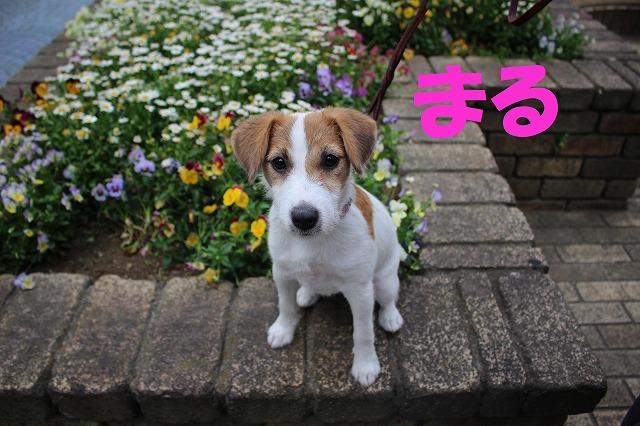 http://tokyo.iac.ac.jp/blog/photos/2018maru.jpg