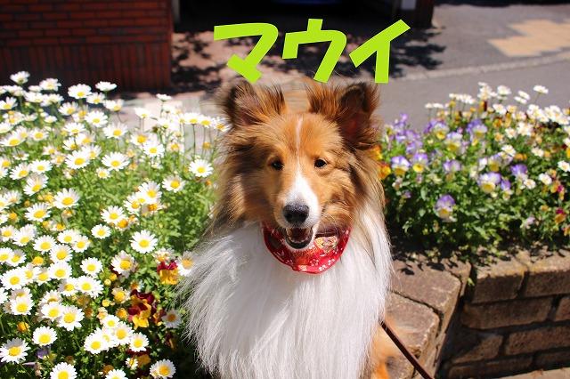 http://tokyo.iac.ac.jp/blog/photos/2018maui.jpg