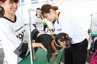 https://tokyo.iac.ac.jp/blog/photos/2019.10.19biyoubu-su%E2%91%A5.jpg