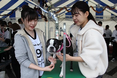 https://tokyo.iac.ac.jp/blog/photos/2019.10.19biyoubu-su%E2%91%A7.jpg