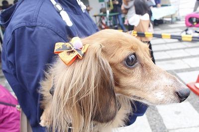 http://tokyo.iac.ac.jp/blog/photos/wanwan%20dakkusu.jpg