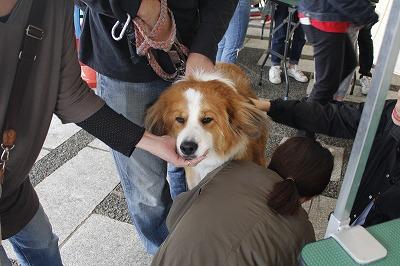 http://tokyo.iac.ac.jp/blog/photos/wanwan%20nikukiyyu%20a.jpg