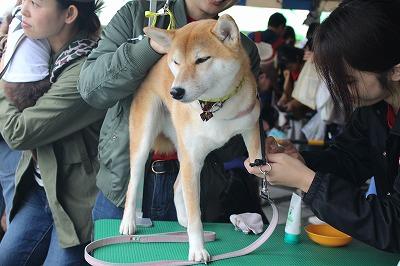 http://tokyo.iac.ac.jp/blog/photos/wanwan%20nikukiyyu%20b.jpg