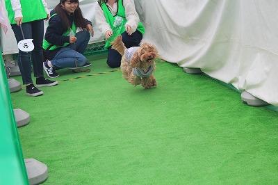 http://tokyo.iac.ac.jp/blog/photos/wanwan%20re-su.jpg