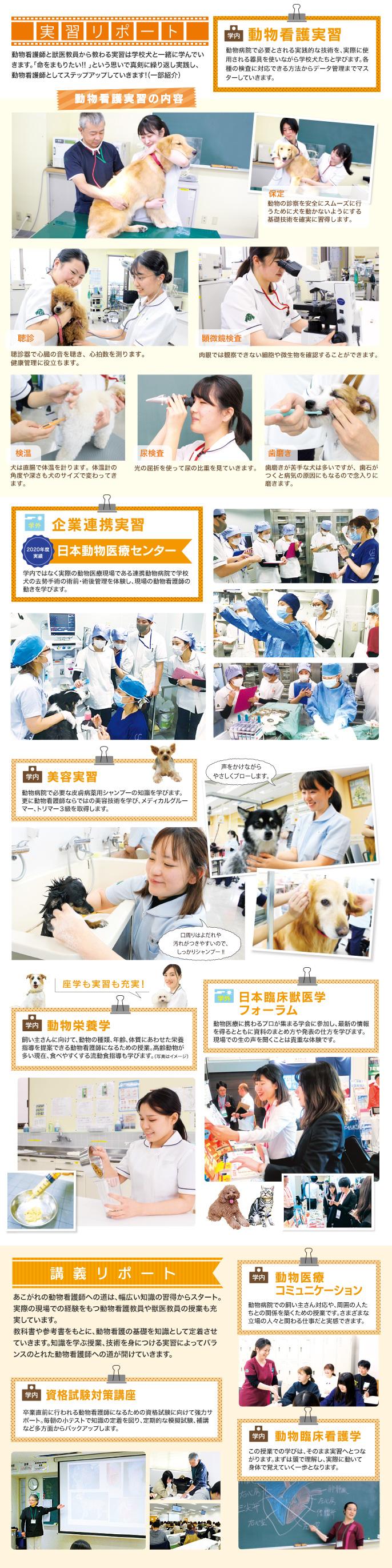 資格 動物 看護 師 国家