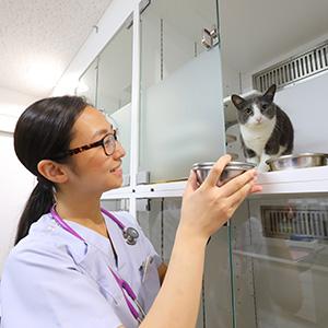 動物 看護 師 動物看護師 - Wikipedia