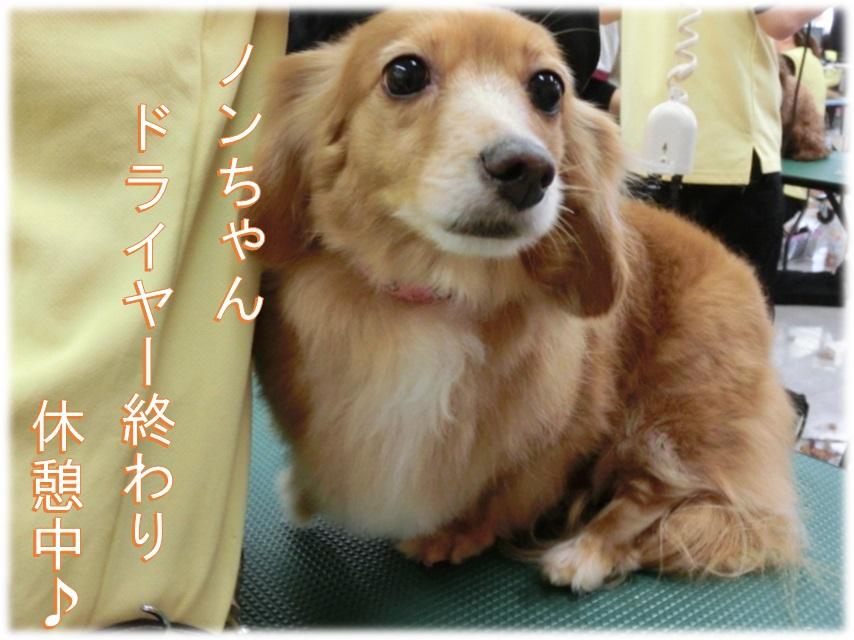 のんブログ用.jpg