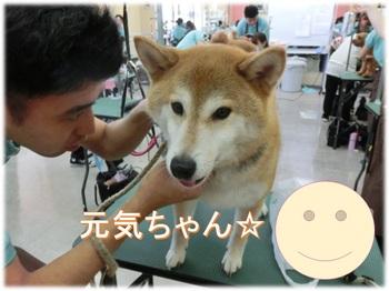 genkidama.jpgのサムネール画像