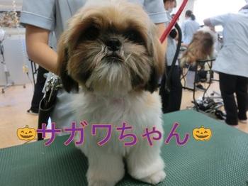 si-zusagawa.jpg