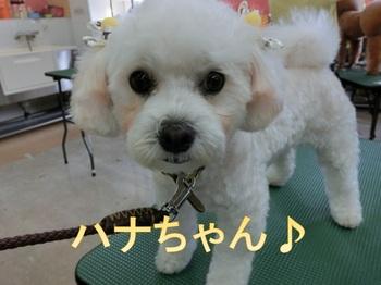 hanamaru.jpgのサムネール画像