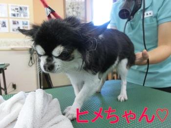 hime-chiwawa.jpg